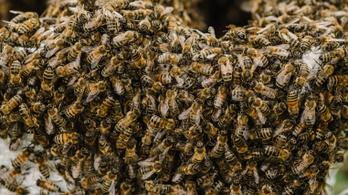 Méhek mérgével az agresszív mellrák ellen