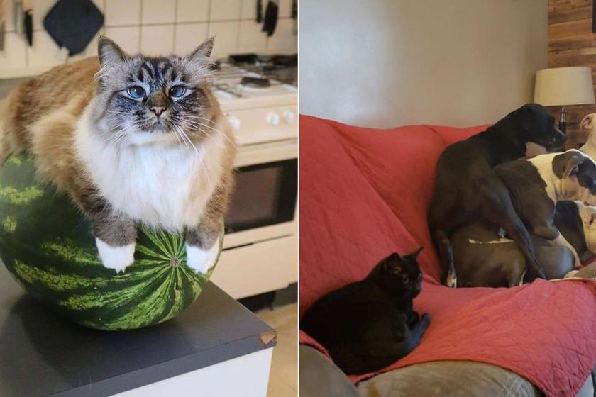 Ilyen az élet macskával: 10 találó és vicces kép, ami ismerős lesz, ha gazdi vagy
