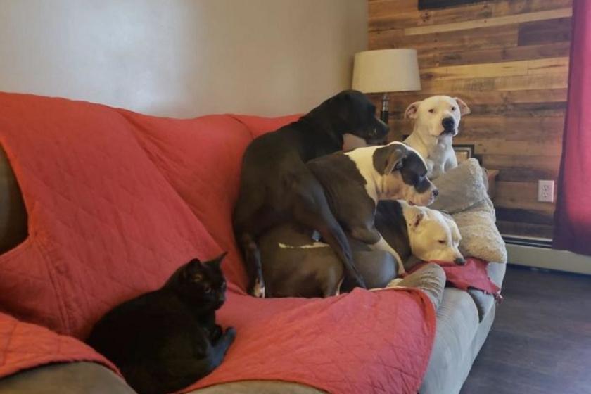 A kutyák is nagyon jól tudják, hogy ki is a ház ura.