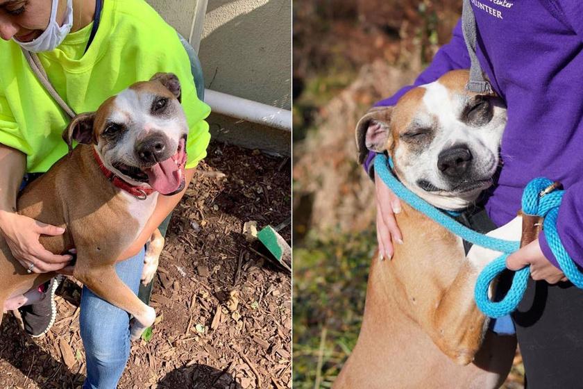 Nem bírja abbahagyni az ölelkezést a kutyus, akit megmentettek - Cuki fotók készültek róla