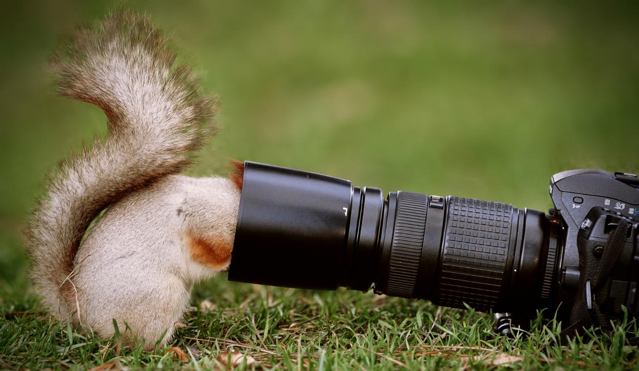 vadvilág fotózás vicces