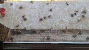 Poloskainvázió: így szabadulj meg a bogaraktól!