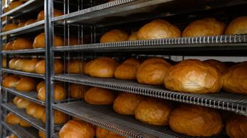 Drágulhat a kenyér, ötödével emelkedett idén a búza ára