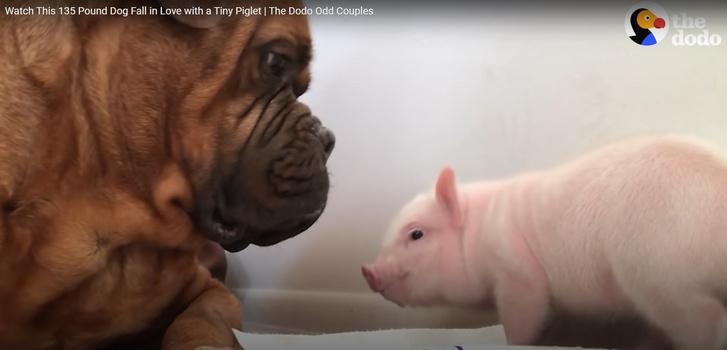 Kutya és legjobb barátja