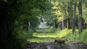 Húszezer hektárral nőtt az erdőterület