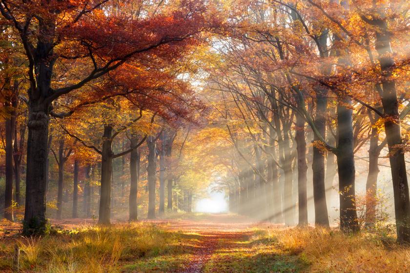Hamisítatlan ősz lesz a héten: ilyen időjárással búcsúzik az október