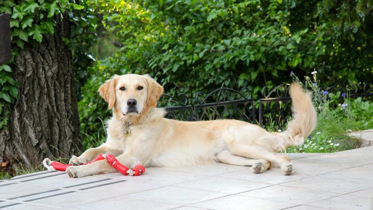 Tényleg beszélni fognak a kutyák?