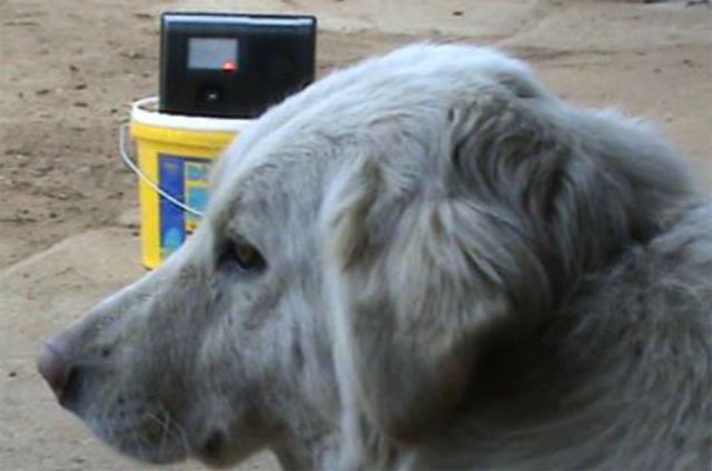 Egy kutya pihen egy ultrahangos kutyariasztó társaságában