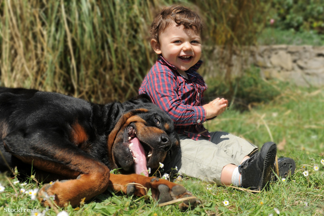 stockfresh 1782772 rottweiler-and-child sizeM