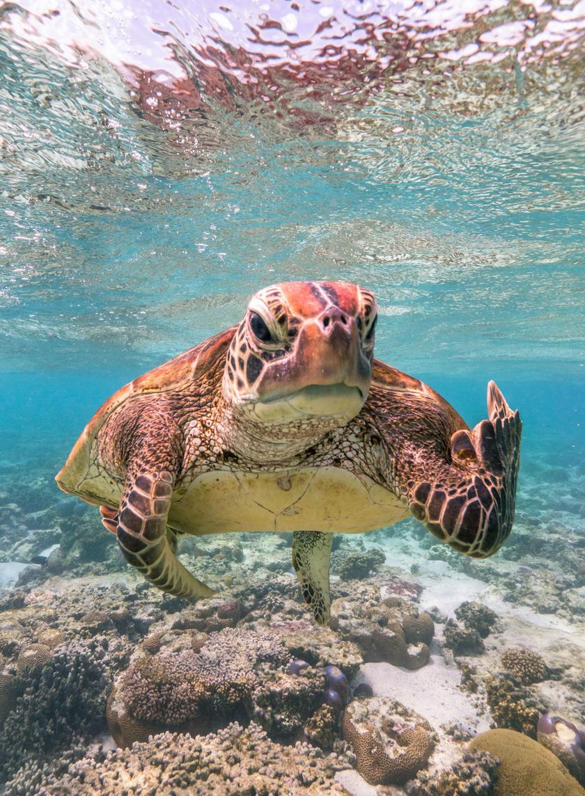 """A 2020-as év összesített versenyében, valamint a Vízi élőlények kategóriában is győzött Mark Fitzpatrick """"Terry, a teknős bemutat"""" című képe."""