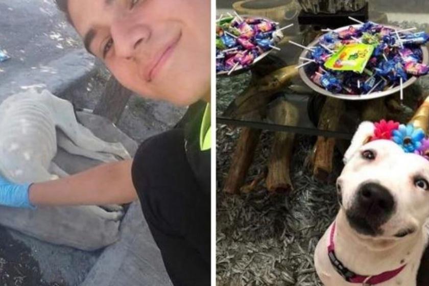 Jól látszik, mekkora különbség van a két kép között. A másodikon már egy boldog, jól tartott kutya látható.