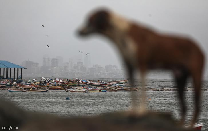 Halászcsónakok vesztegelnek egy kikötőben a nyugat-indiai Mumbaiban