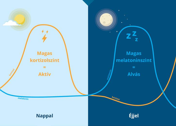 A grafikon a fényben és a sötétben lejátszódó hormonális folyamatokat mutatja be. A fényhez a biológiai óra a nappalt és az aktivitást társítja, így a vér kortizolszintje emelkedett, a sötétséghez pedig az éjszakát és a pihenést, amikor a melatonin szintje nagyon magas. A két hormon egymással ellentétes hatású, de egyben egymás kiegészítő párja is