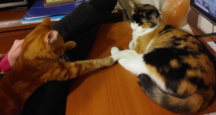 A macska szórakoztatására, figyelmének lekötésére azért még mindig a legjobb megoldás egy másik cicahaver - ha van rá lehetőség. (Fotó: Herpai Gergely)