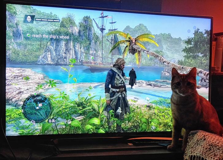 Azért nem minden mozgókép érdekli a macskát, például az Assassin's Creed IV Black Flag hidegen hagyta Cicerót. (Fotó: Herpai Gergely)