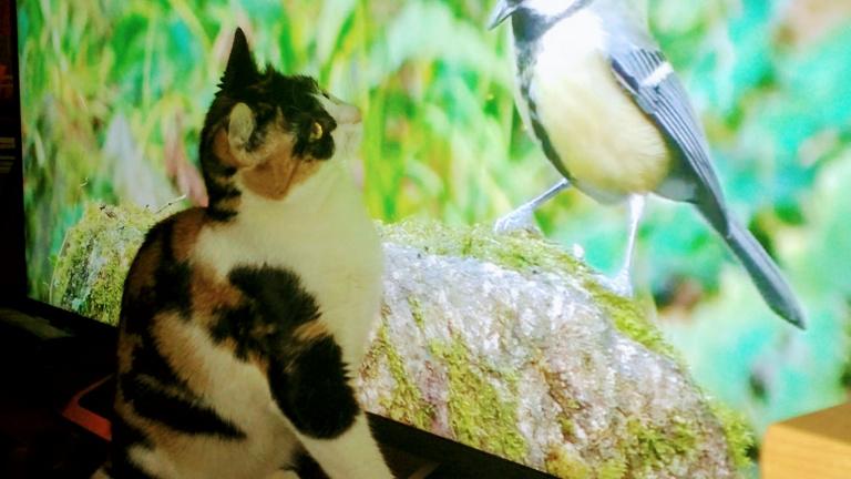 Macskamozi: Youtube-filmek cicáknak