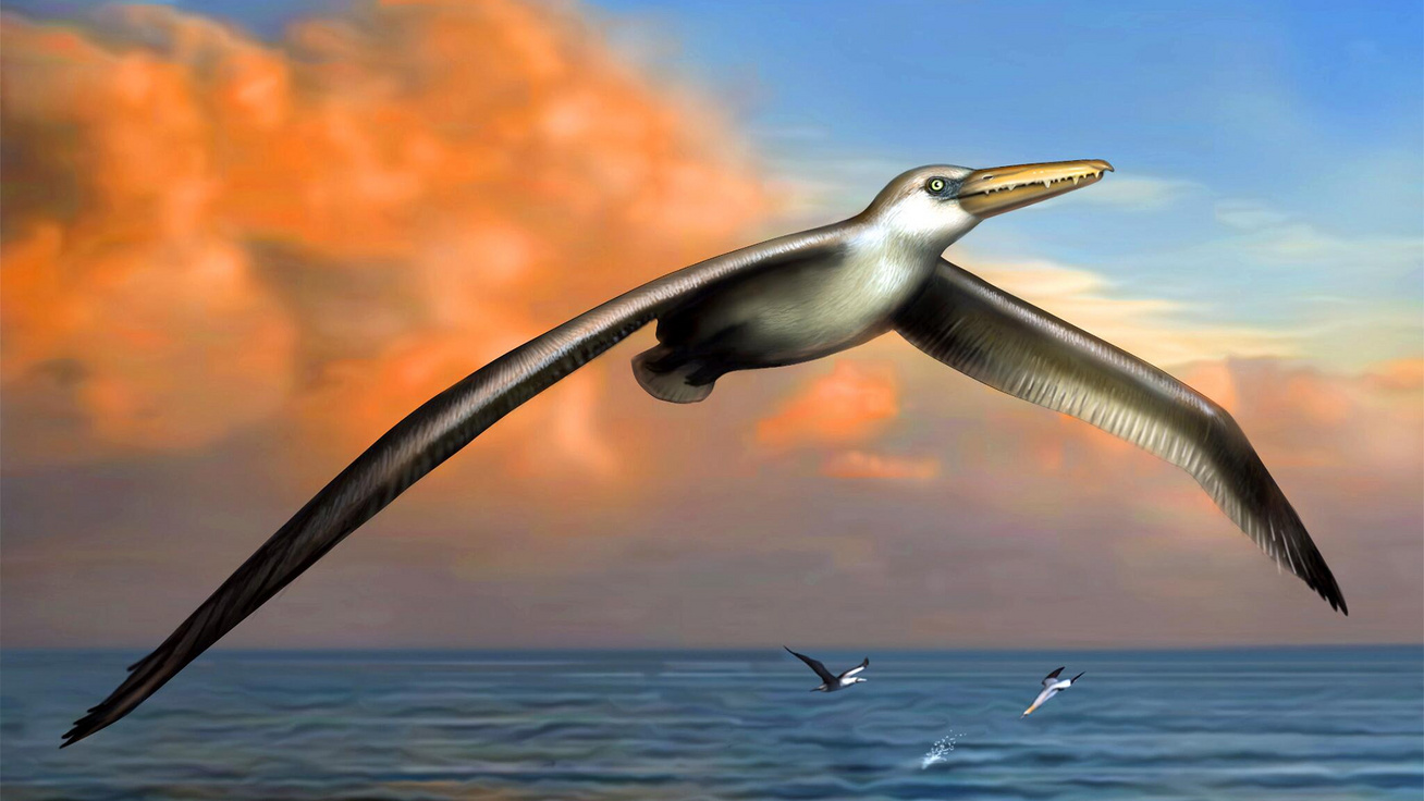 Gigantikus méretű madarak maradványait azonosították az Antarktiszon