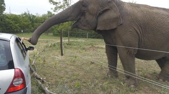 Állatkínzás gyanúja miatt vizsgálódnak az elpusztult szadai elefántok ügyében