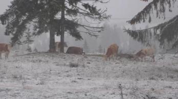 Leesett az első hó a Hargitán