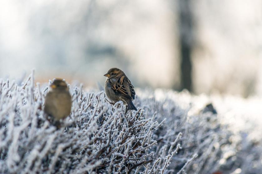 madáretetés madarak télen madáretető madár (1)