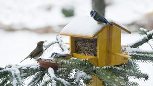 Miért nem fáznak fel a madarak, ha állandóan mezítláb vannak?
