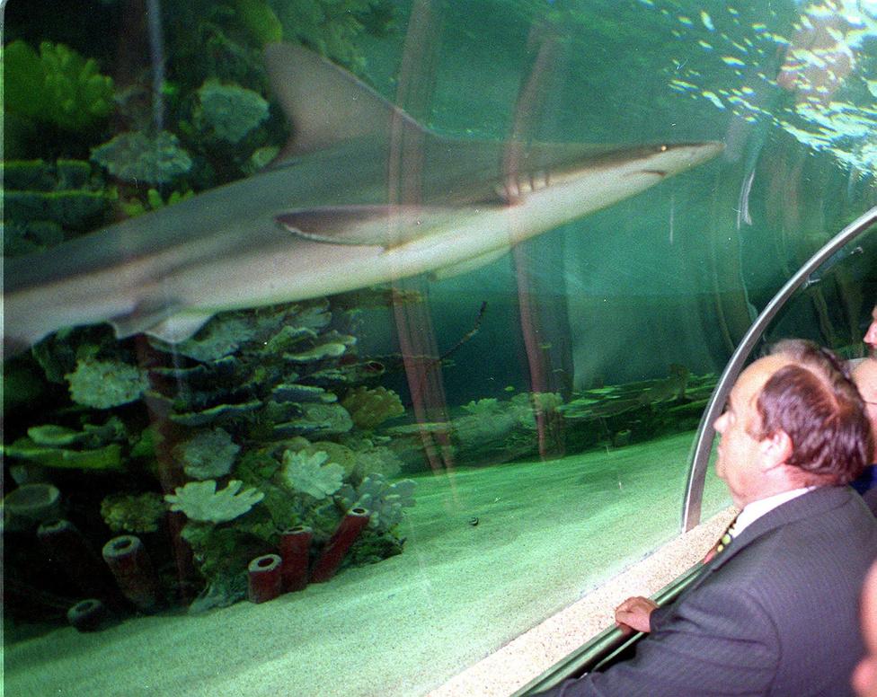2000. május 25-én Torgyán megnézte a frissen átadott Tropicarium cápáit.
