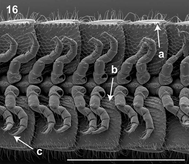 leggy-millipede-5