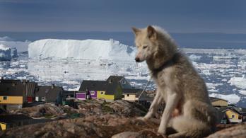 Az Északi-sarkon minden melegebb, mint szokott