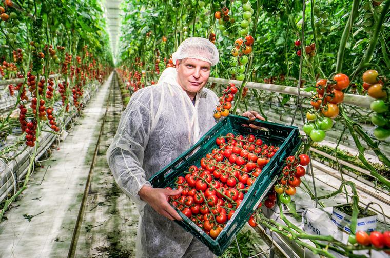 """""""Amióta IR-es az öreg Cyla, sokkal többet tüsténkedik a konyhában és több zöldséget-gyümölcsöt fogyaszt"""" - mondja Kajdi Csaba a fotókhoz érkezett sajtóközleményben"""