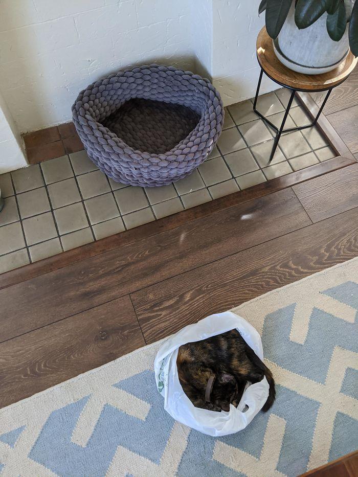 A macska gazdája nagyjából 20 ezer forintot költött erre az ágyra, de úgy tűnik, elég lett volna csak a zacskót hazahozni a boltból.
