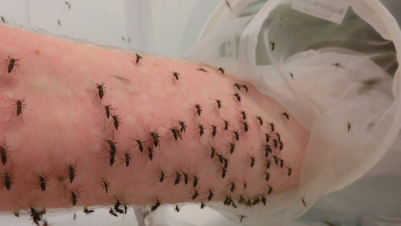 szúnyog-borító