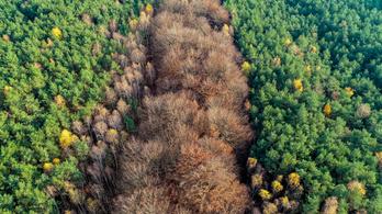 Miért nem minden fa örökzöld?