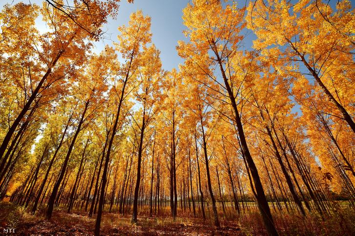 Őszi erdő a Nyíregyházához tartozó Nagyszállás közelében 2018. október 9-én.