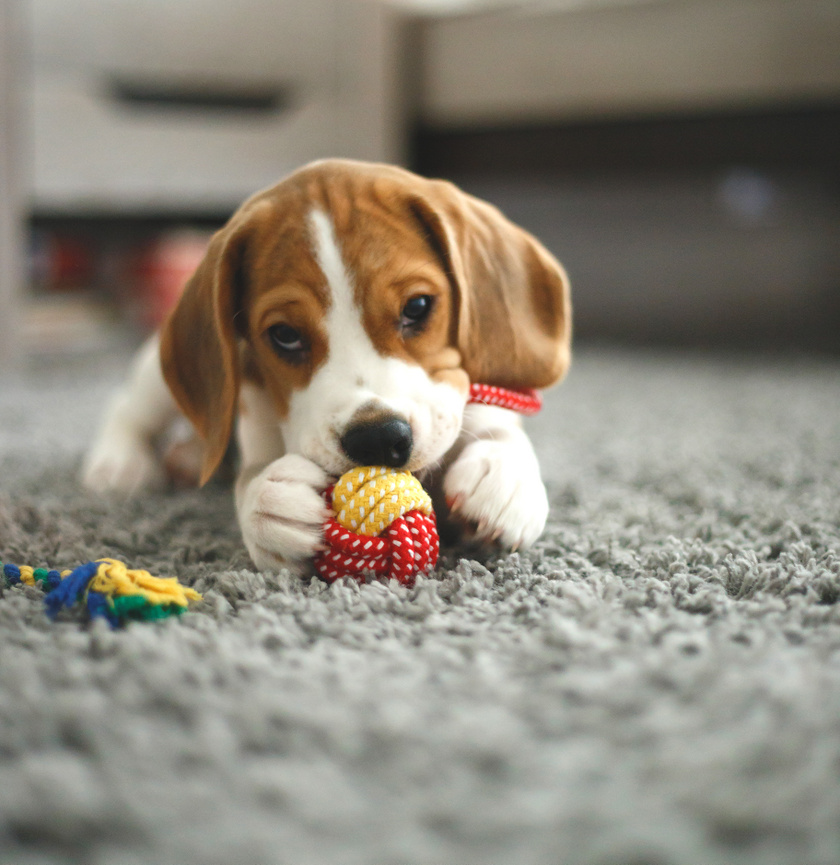 kutya-jatekkal
