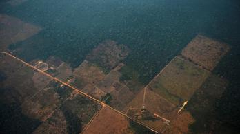 Negyedével csökkenhet a fajok élőhelye az évszázad végére