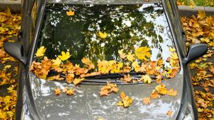 Nem szeded le a faleveleket az autóról? Baj lehet belőle!