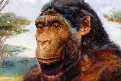 paranthropus-robostus-cov