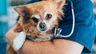 Cukorbetegség: több ezer kutya és macska érintett Magyarországon. Lehet, hogy a tiéd is?