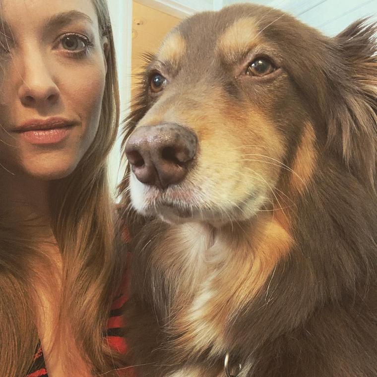 Igen, Finn Amanda Seyfried színésznő terápiás kutyája.