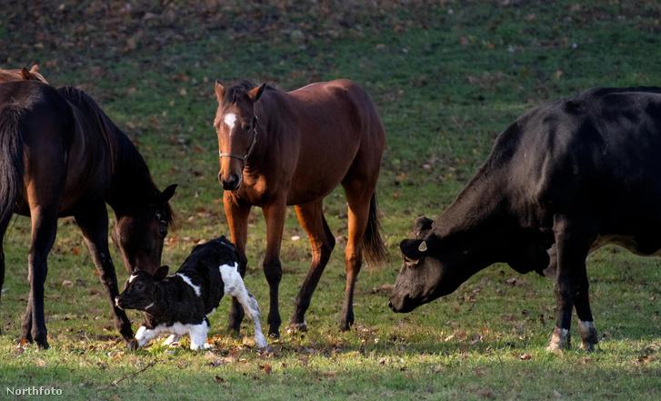tk3s sn helpful horses 06