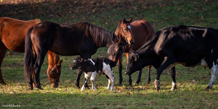 tk3s sn helpful horses 05