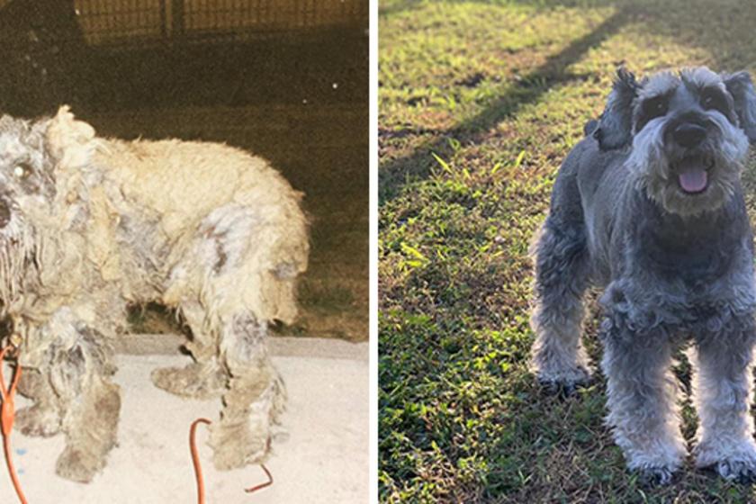 Borist egy önkéntes vitte az állatmentőkhöz, ahol szívférgességet állapítottak meg a kutyánál. Itt talált rá új gazdája, Veronica öt éve, a kutyus pedig azóta teljesen megváltozott, és újra egészséges.
