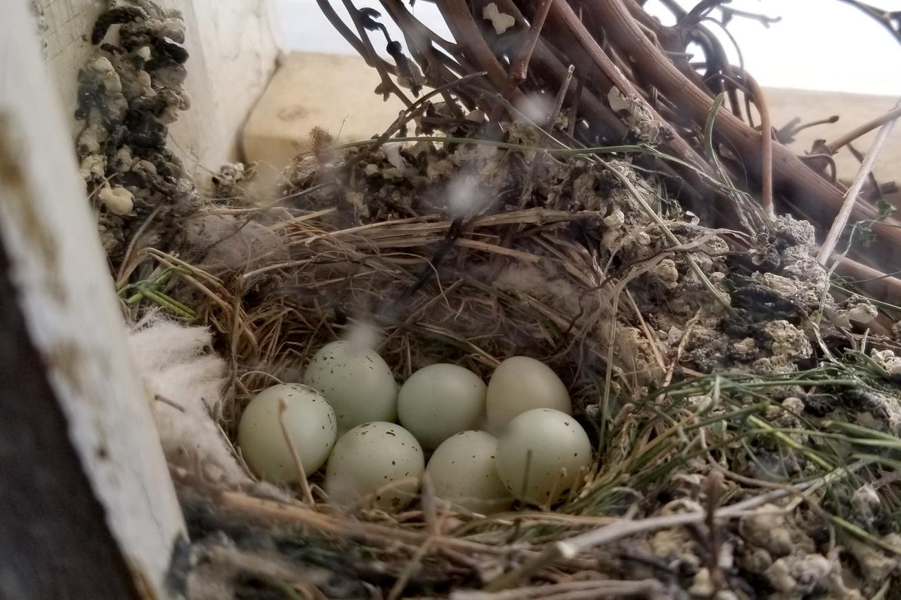 tojasok-feszek