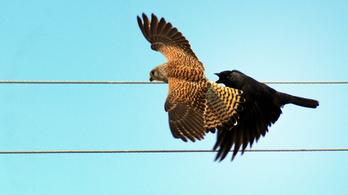 Nemzetközi program indult a madárpusztulás ellen