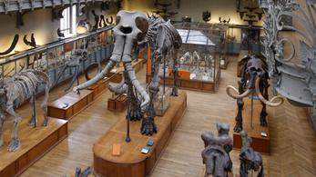 A világ legnagyobb mamutcsontváza felújítására gyűjt a párizsi Természettudományi Múzeum
