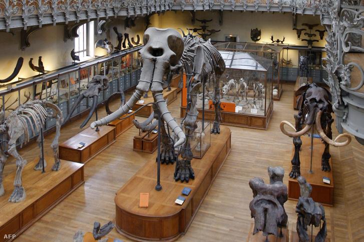 A durfort-i mamut