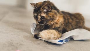 Miért vannak a macskák úgy rákattantva a lézerfényre?