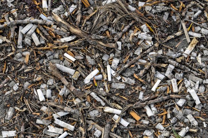 Eldobott cigarettavégek százai egy gondozatlan területen a IX. kerület Ecseri út közelében 2019. áprilisában