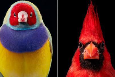 madár-portré-borító