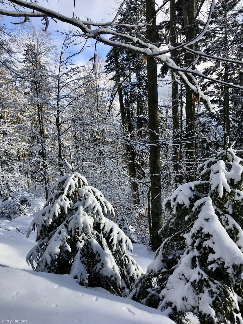 Bajor-erdő Nemzeti Park.
